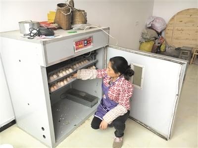 李丹:养鸡种茶 实现脱贫梦
